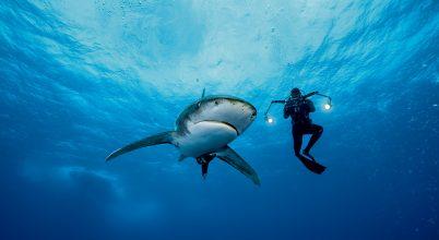 Lidérces álmok cápája