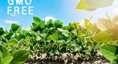 Szigorodtak a GMO-mentes termelés szabályai hazánkban