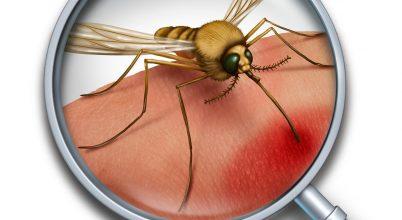 Szúnyogok terjesztette új betegség