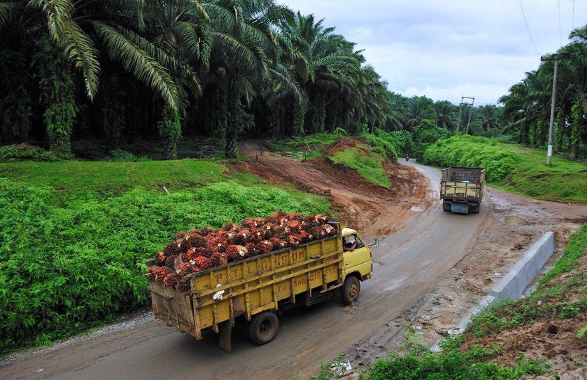 Még mindig természetkárosító pálmaolajat használunk