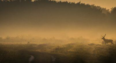 A nap képe: Vándor