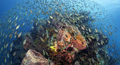 A halak is kedvelik a társaságot
