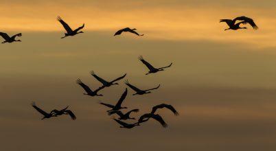 Több millió vonuló madarat számláltak meg