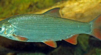 Melyik legyen 2017 hala?
