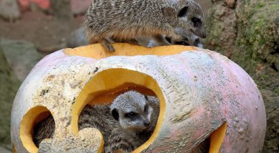 Állatkerti halloween