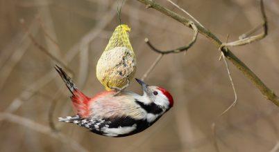 127. madáretetési szezon