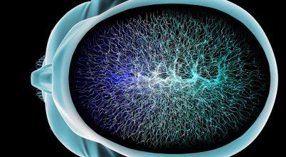 Csak az emberi agyra jellemző idegi tulajdonságok