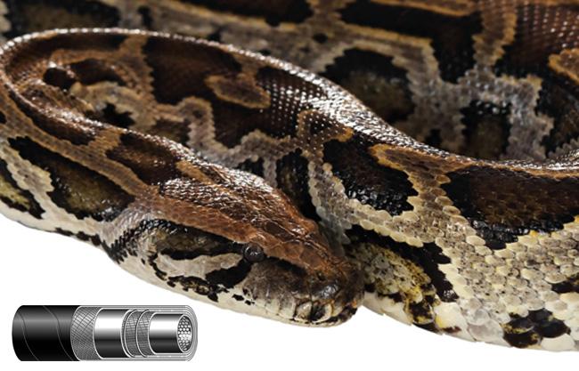 Csőkígyók – kígyócsőből