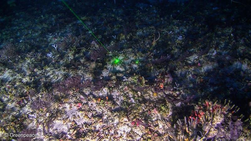 Egyedülálló korallzátony az Amazonas folyó torkolatánál