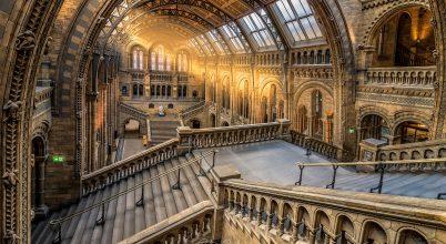 A nap képe: Londoni Természettudományi Múzeum