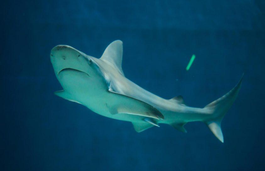 Tilos a cápales Észak-Izraelben