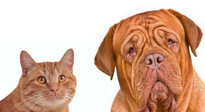A macskák memóriája legalább olyan jó, mint a kutyáké