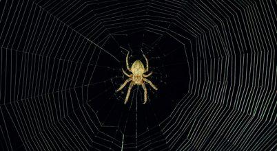 Finomhangolt pókháló