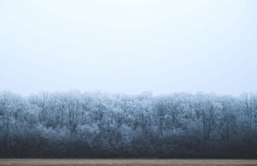 A nap képe: Fagyos erdő