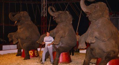 Nélkülözhetetlen egy cirkuszban az állatprodukció?