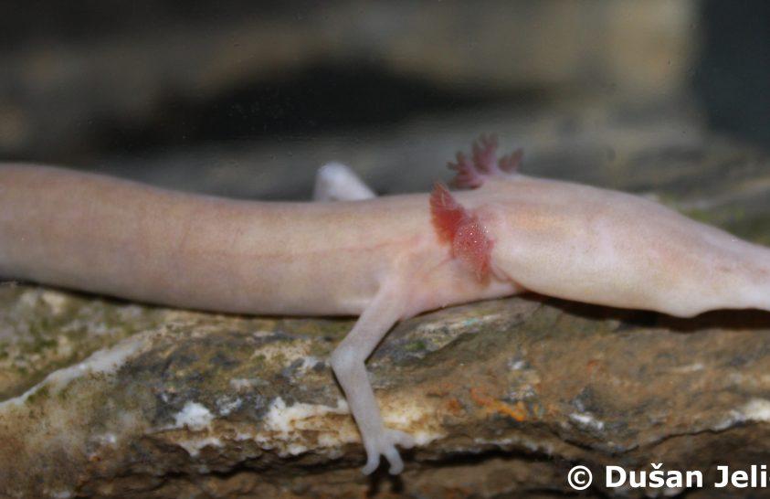 Tudományos mérföldkő a barlangi élővilág megismerésében