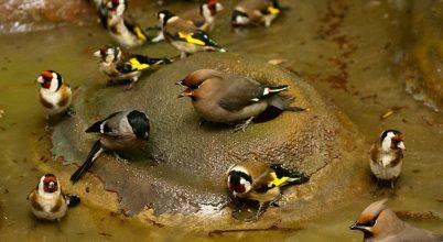 Hortobágyon gyógyulnak a csempészett madarak