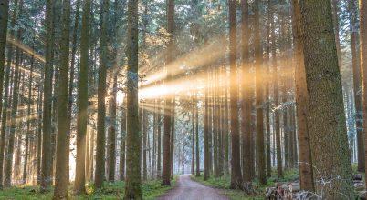 A nap képe: Napsugarak a Fekete-erdőben