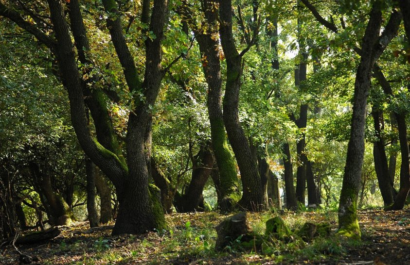 Fák és emberek
