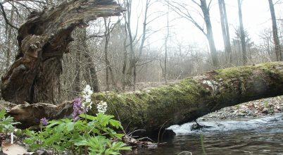 Nagyszabású kutatás hegyvidéki erdeinkről