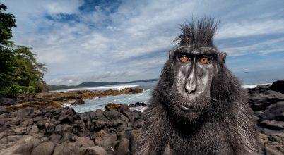 Életre való majmok