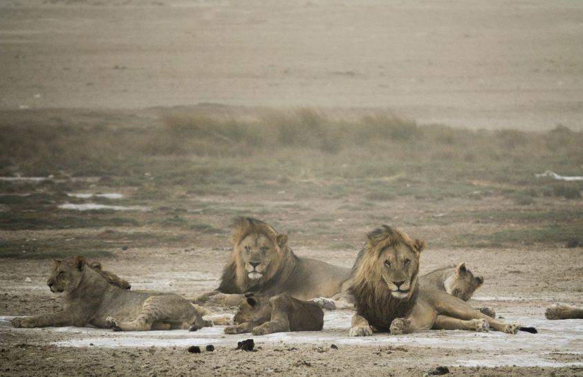 Fotók Afrika vadvilágáról
