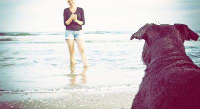 A kutya és az ember látása közötti eltérés