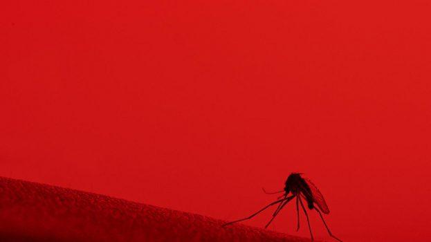 Egy év múlva bevetik a malária elleni oltást