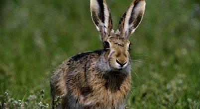 Fotók a tavaszi állatseregletről – földön, vízen, levegőben