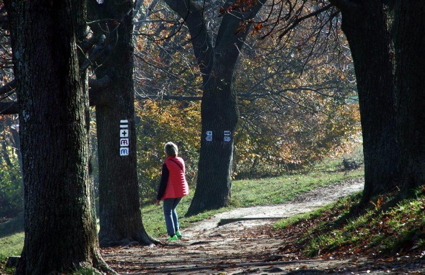 Szívet formázó új turistaút nyílik a Zselicben