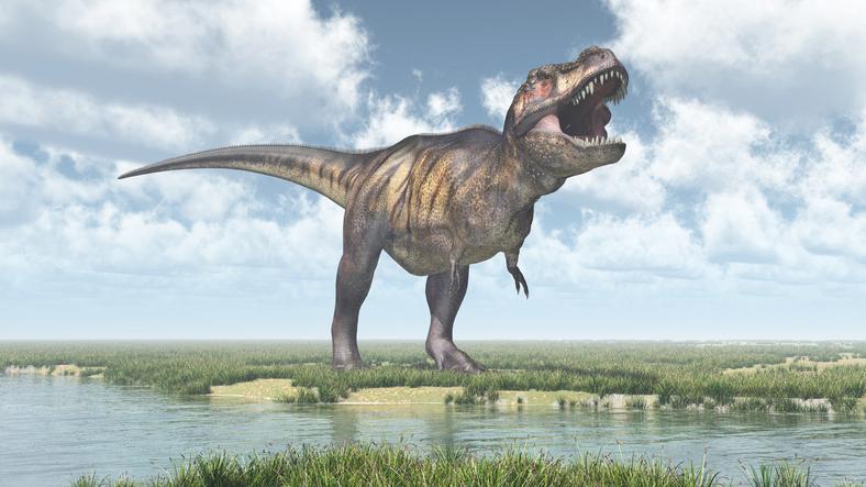 Újabb adat a T. rex óriási erejéről