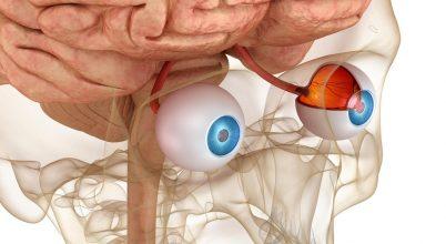 Megérteni az agykéreg fantasztikus alkalmazkodóképességét