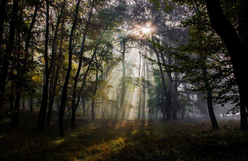 Az erdők szerepe életünkben