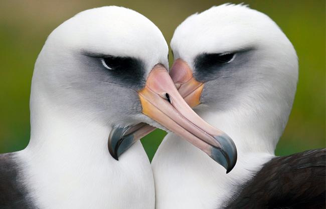 Meleg madarak, csalfa emlősök
