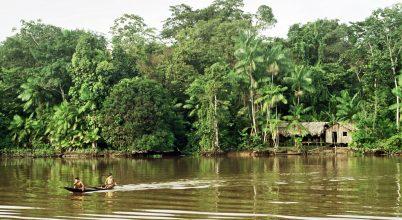 Láthatatlan sebeket ejtünk az Amazonas-medencében