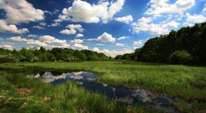 Újabb rezervátum kapott védettséget az Európai Amazonas területén
