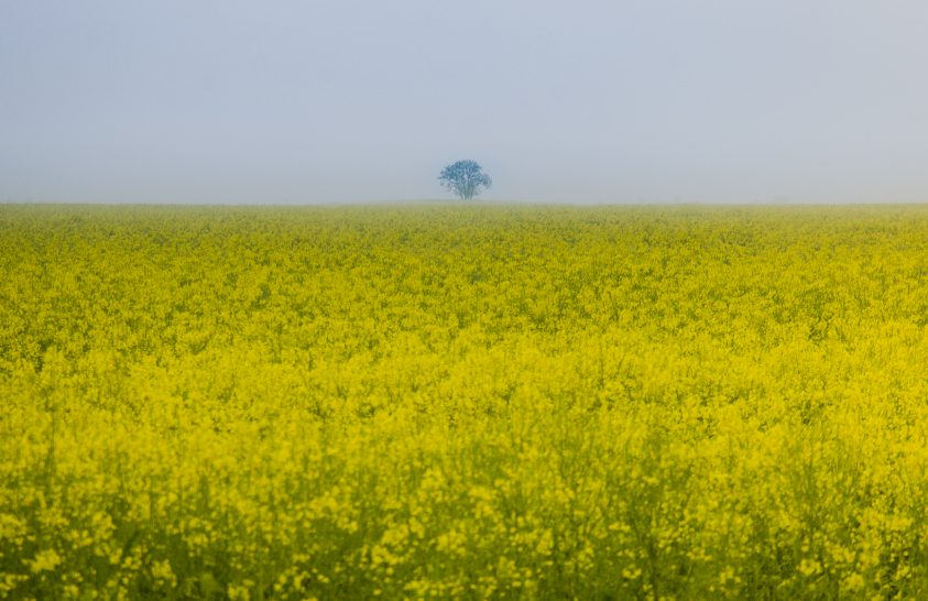 A nap képe: Egy magányos fa a végtelen horizonton