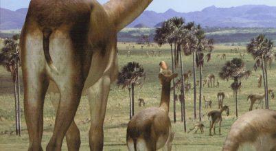 Megoldódott Darwin legkülönösebb állatának titka