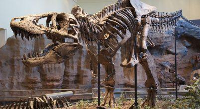 Megfosztották tollaitól a Tyrannosaurus rexet