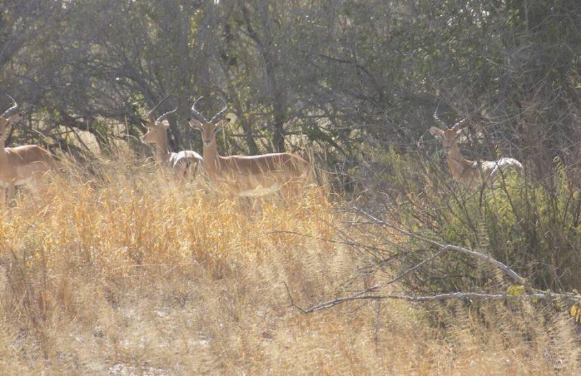 Minden idők egyik legnagyobb vadállat-áttelepítési programja indul