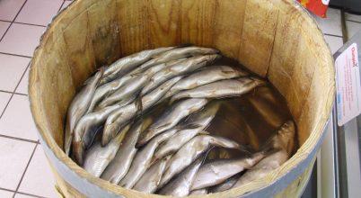 Évente 10 millió tonna halat pazarolunk el