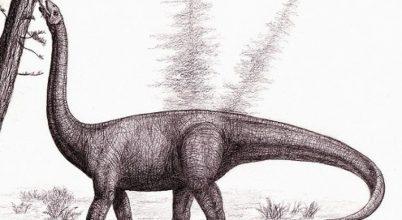 Az elfeledett dinó újabb csontját találták meg