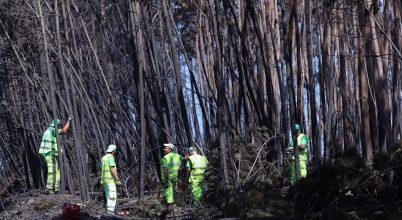 Kevesebb eukaliptuszerdő, kevesebb tűzvész Portugáliában