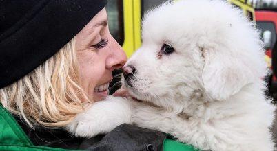 Génekben rejlik a barátkozás – embernél, kutyánál is