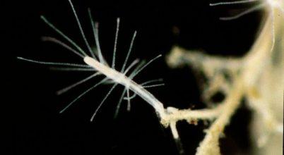 A halhatatlan medúza igaz története