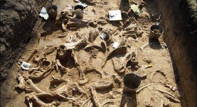 Hatalmas dinoszaurusz- és mamuttemetőt találtak Szibériában
