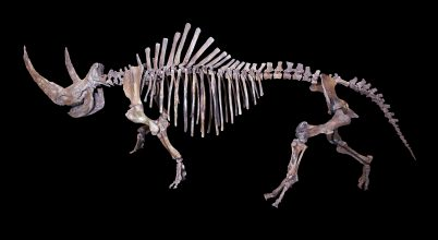 Figyelmeztető jel lehet a gyapjas orrszarvúk egyik rendellenessége