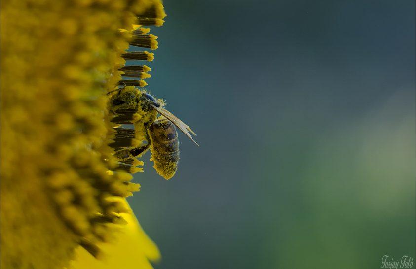 A nap képe: A dolgozó, akit beborít a virágpor