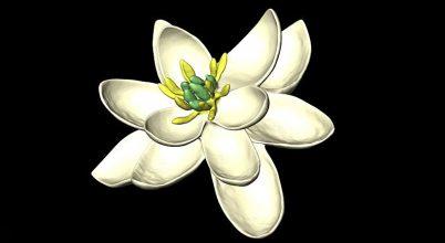 Végre kiderült, miként nézett ki a legősibb virág