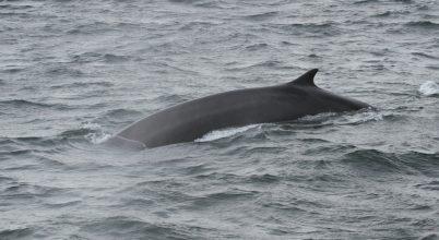 Hatalmas bálnák bukkantak fel Horvátországban
